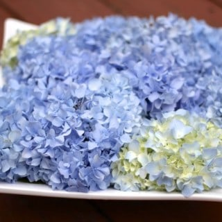 Favorite Ways to Display Hydrangea Flowers, and a Google Reader alert