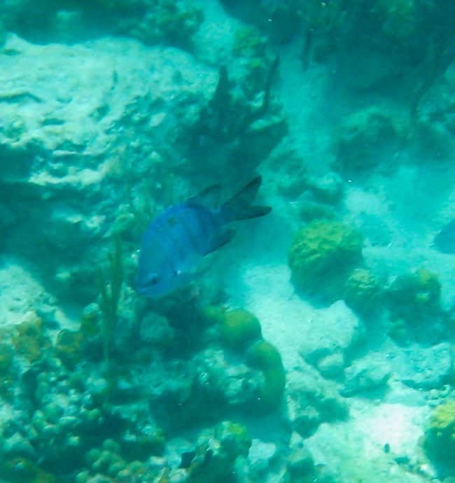 St John Snorkeling Caribbean Island Vacation photos