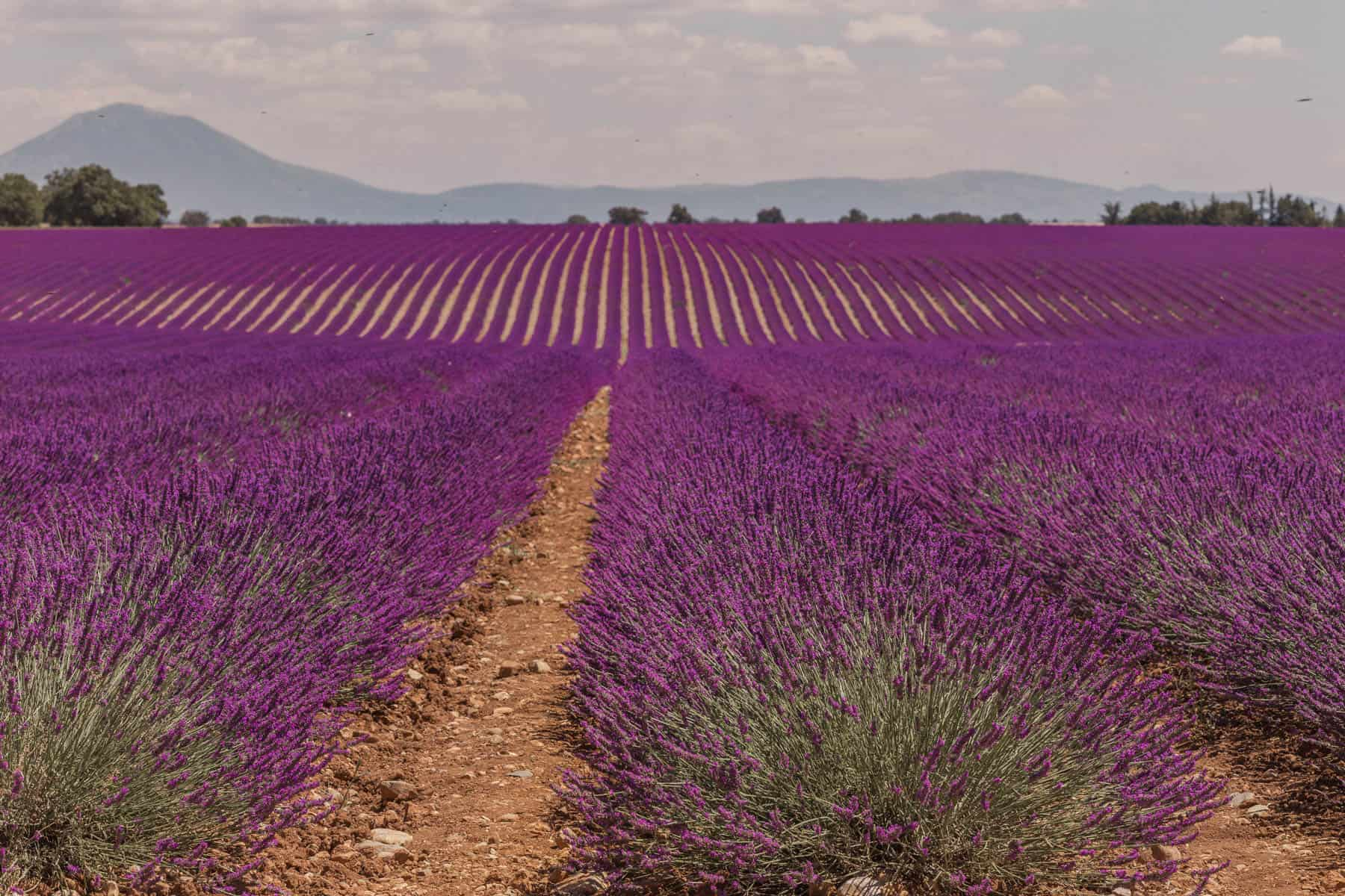 5 days in Provence Itinerary & Day Trips from Aix en Provence