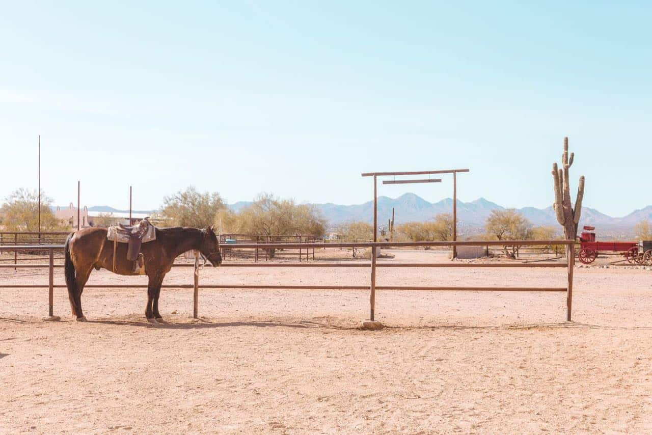 5 day itinerary for visiting Phoenix Arizona