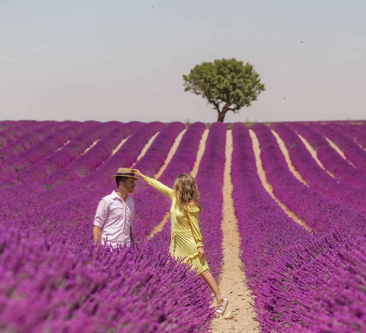 couple posed in a lavender field
