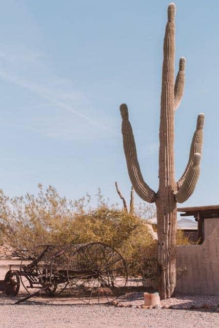 Cactus at a ranch in Arizona