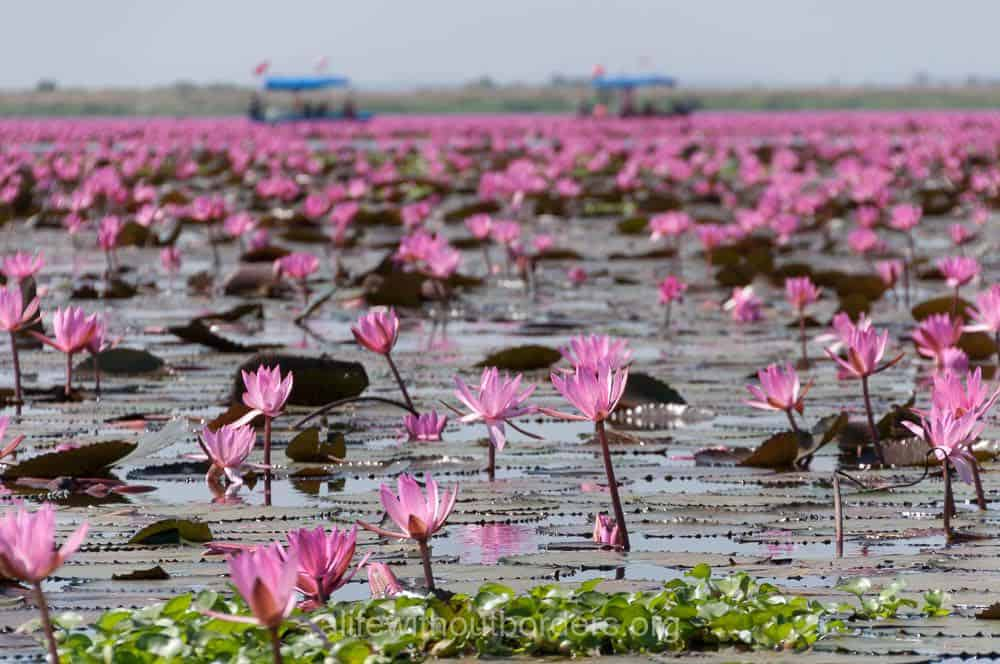 beautiful flower fields in Asia