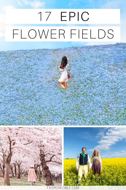 Beautiful Flower Fields Around the World | best flower field images | sunflower fields | lavender fields | canola fields | Japan flower fields | bulb fields | tulip fields | Carlsbad flower field